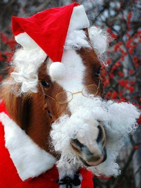 Country Corner Greenhouse Poinsettia Extravaganza Patrick the Therapy Horse as Santa